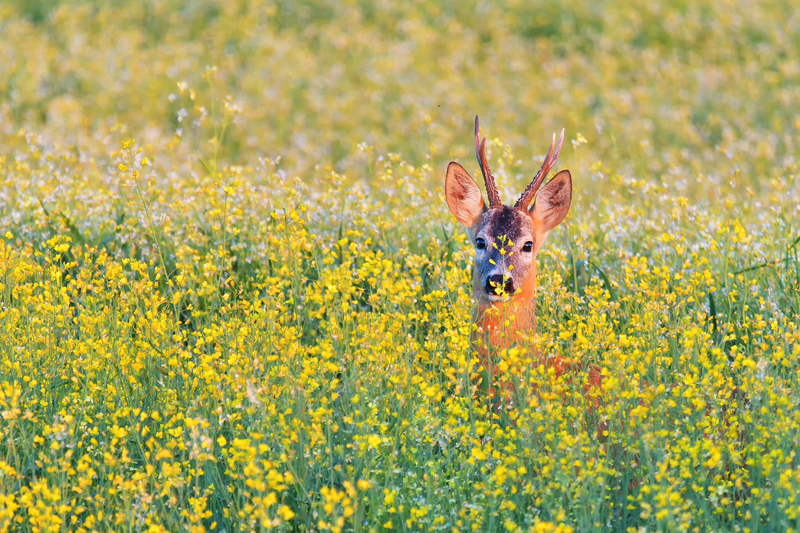 Virtual outings: An online dose of Romania's nature and wildlife