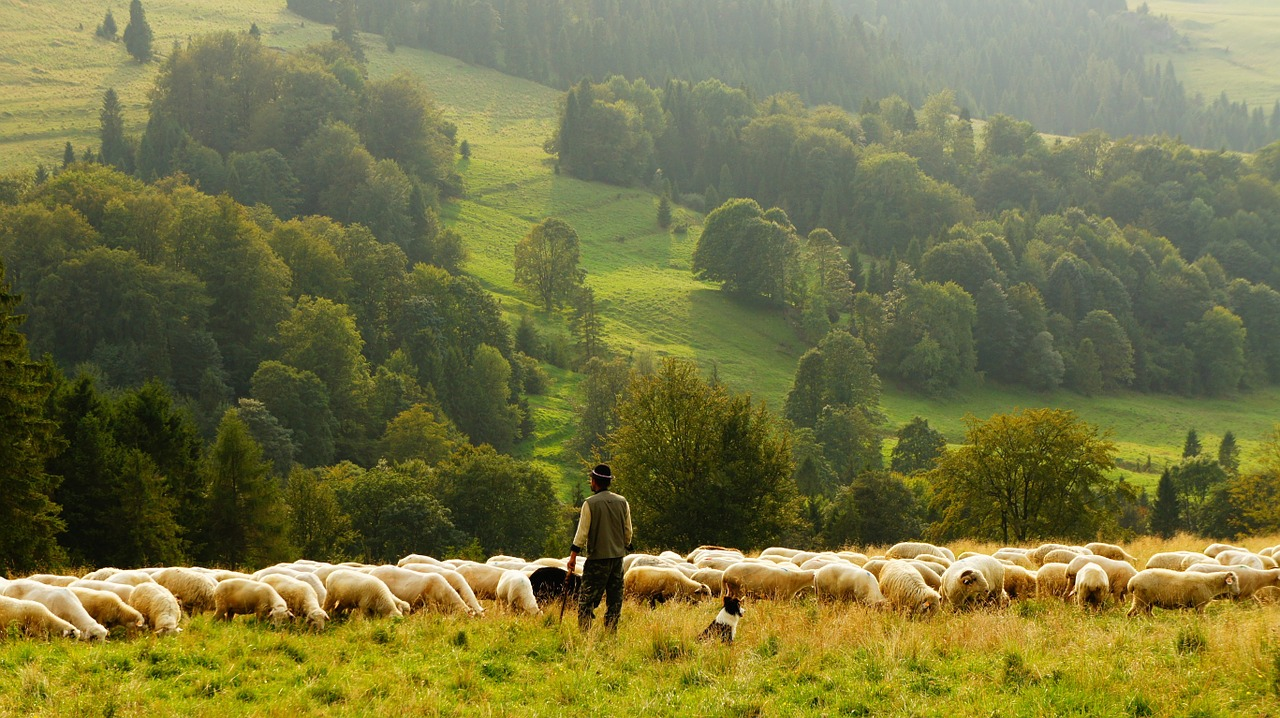 Romanian traditions & superstitions on the day of St. Dumitru, the protector of shepherds