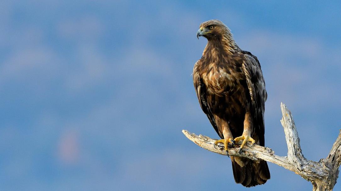 Nature In Făgăraș Mountains The Golden Eagle In Romania Romania Insider