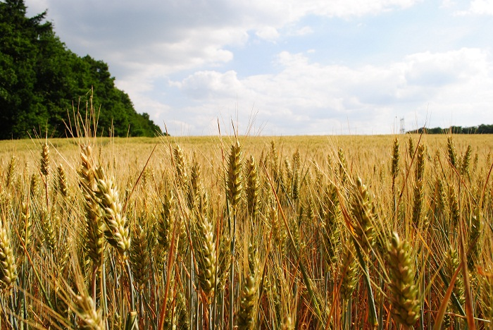 Report: Price of agricultural land in Romania up, but still lower than most European countries