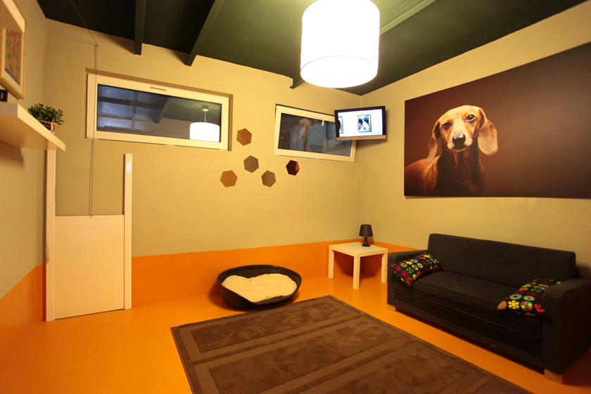 Pet Hotel Opens New Wing In Bucharest With Eur 300 000