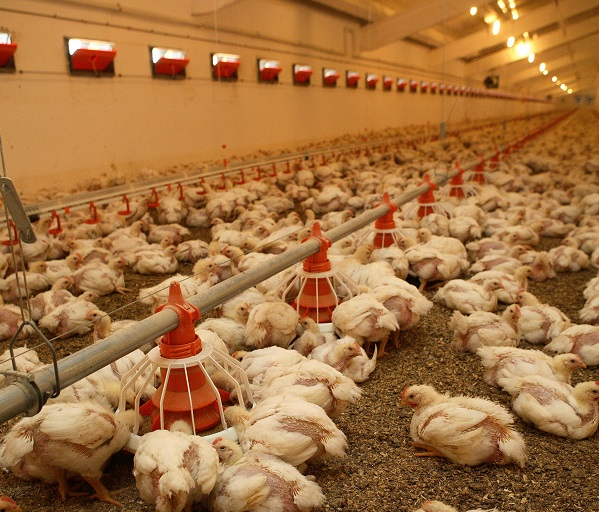 free sample of poultry farm business plan
