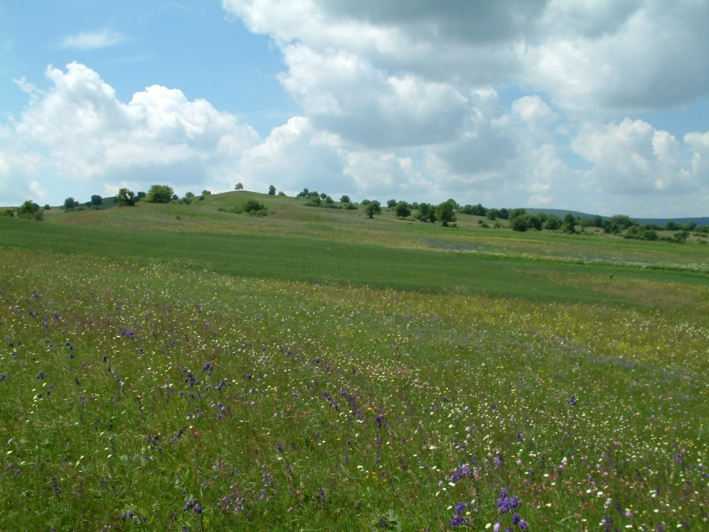 Romania s farmed landscapes an international dilemma for Romania landscape