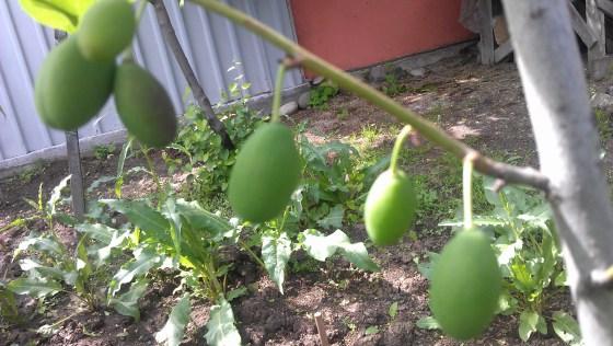 garden yvette 5