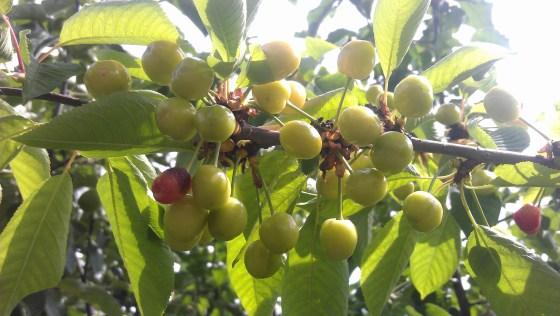 yvette garden 5