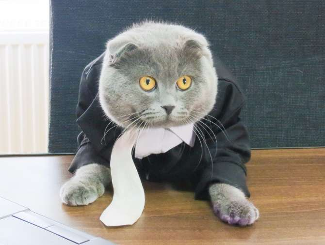 Romanian Tech Company Hires Cat As Manager Romania Insider
