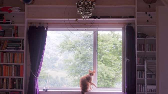 Arabella's cat