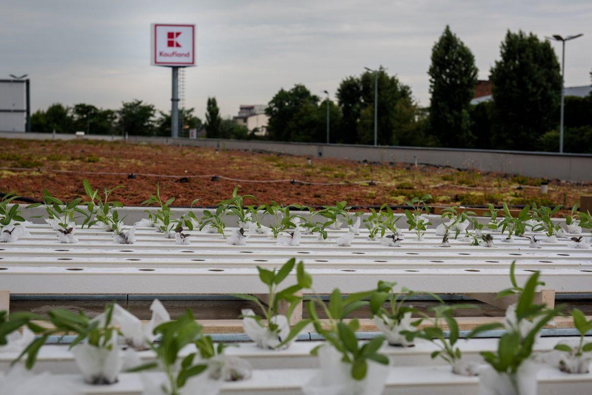German retailer turns Romania store roofs into urban gardens ...